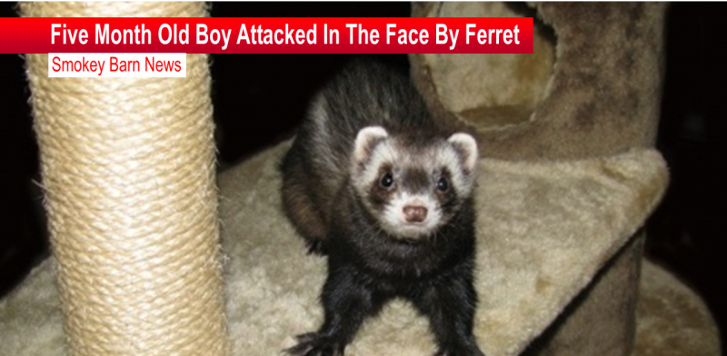 baby attacked by ferret slider