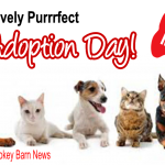 Pet adoption Day slider