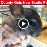 Robertson County Gets New Exotic Pet Shop slider