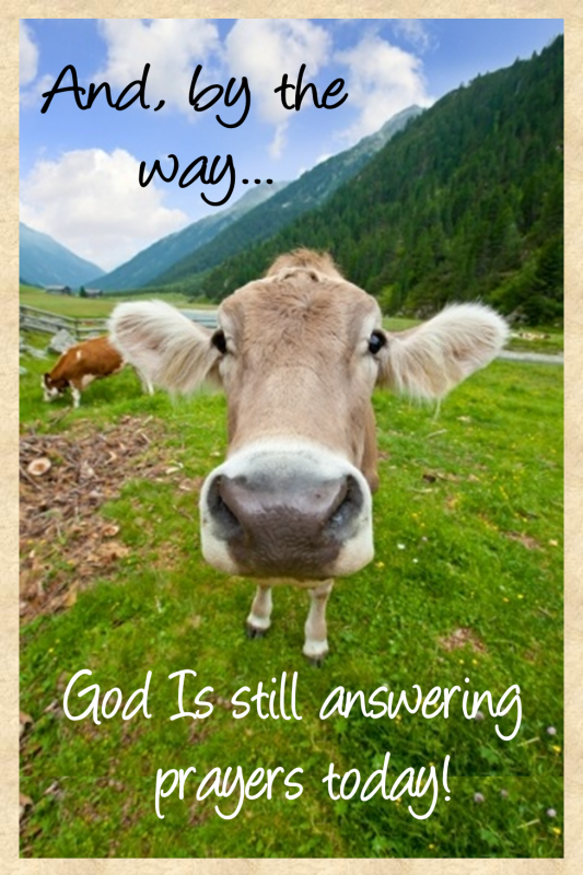 cow God still answers prayer